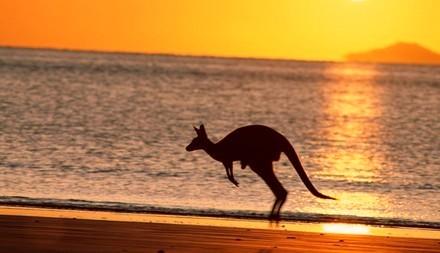 Австралийский пляж, кенгуру