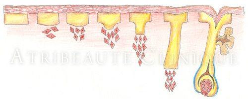 Эмбриология волос