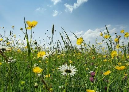 лечебные травы, луг, поле, трава